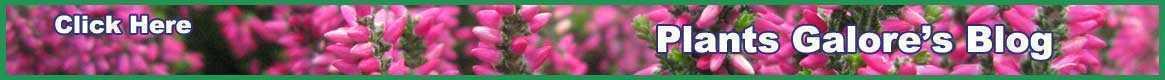 Plants Galore Blog
