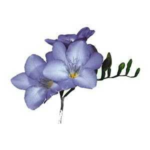 Freesia Single Blue Bulbs 20 Per Pack