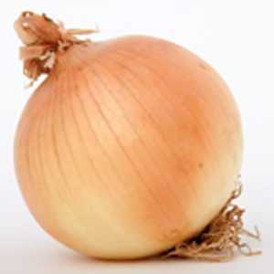 Onion Centurion F1 Bulbs 50 Per Pack