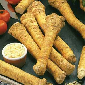 Horseradish (Horse Radish) Armoracia Rusticana 2 Per Pack