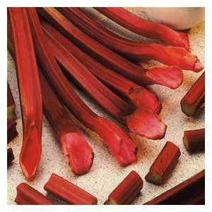 Rhubarb Red Champagne (Rheum) 1 Per Pack