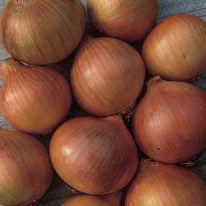 Yellow Onion Sets Setton 50 Per Pack
