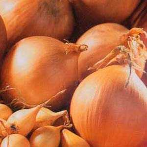 Yellow Onion Sets Sturon 50 Per Pack