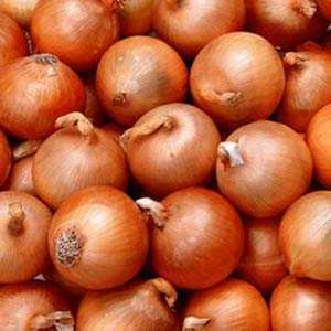 Yellow Onion Sets Turbo 50 Per Pack