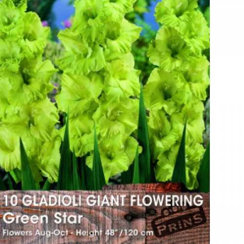 Gladioli Giant Flowering 'Green Star' Bulbs 10 Per Pack