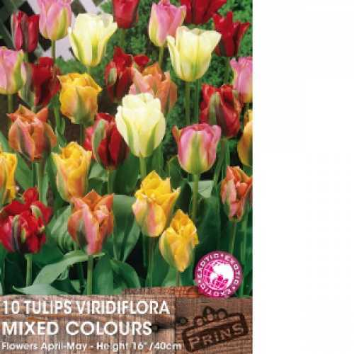 Tulip Bulbs Viridiflora Mixed 10 Per Pack