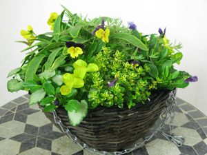 Winter Planted Hanging Basket - Mixed Plants 12 inch Wicker Basket