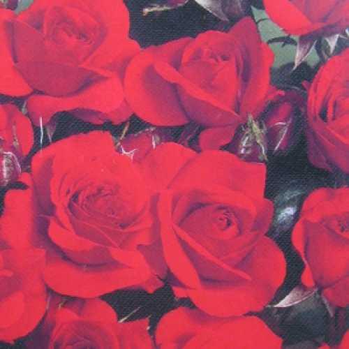 Evelyn Fison Floribunda Rose
