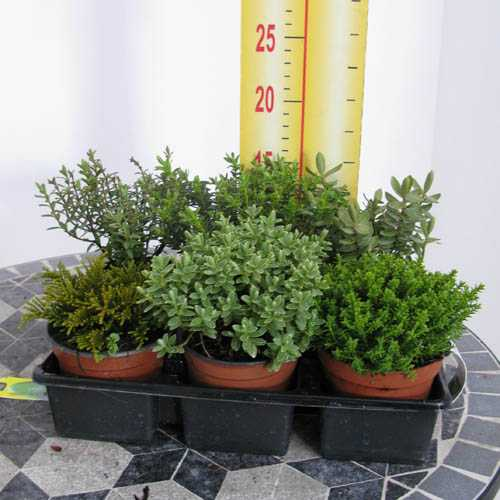 Ground Cover Plants For Slopes