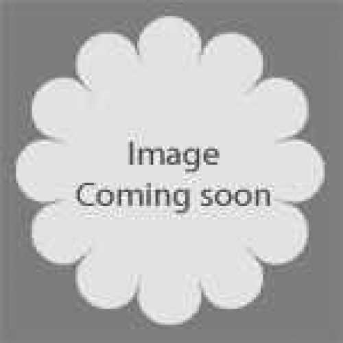 Geranium Rozanne (Cranesbill) 2-3ltr