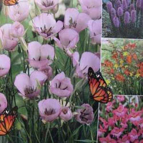 Calochortus Cupido, Liatris, Gladioli Nanus Charming, Crocosmia Happy Butterfly Collection 50 Per Pack