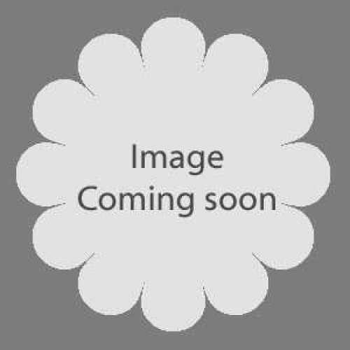 Rose 1/2 Standard Silver 25th Anniversary Floribunda Rose 80cm Clear Stem  7.5ltr