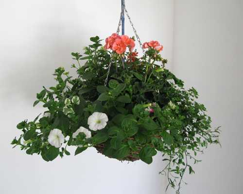 Summer Planted Wicker Hanging Baskets 14 inch