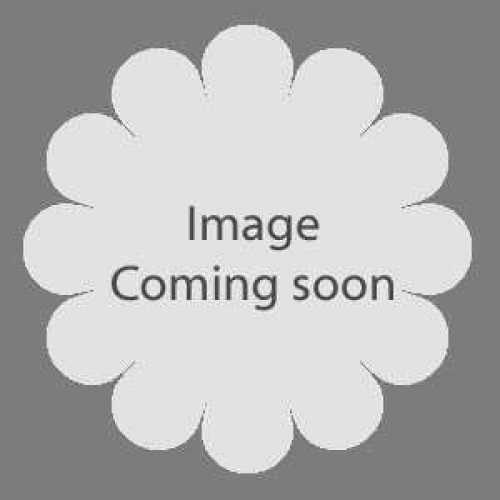1 Allium 'Stiptatum'