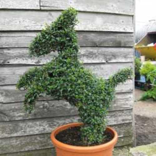 Topiary Horse 65cm
