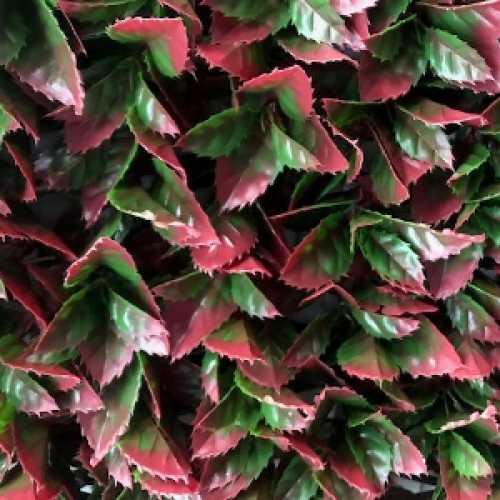 Red Variegated Beech Artificial Trellis