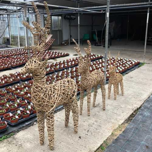 Wicker Reindeer Set of 3 - Small, Medium & Large