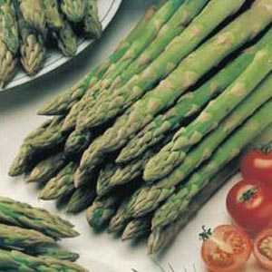 Asparagus Connovers Colossal 2 Ltr