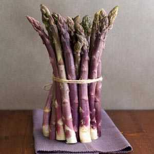 Asparagus Purple Passion 2 Ltr