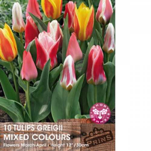 Tulip Bulbs Greigii Mixed 10 Per Pack