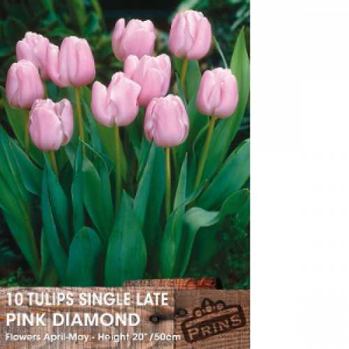 Tulip Bulbs Single Late Pink Diamond 10 Per Pack