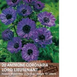 Anemone Bulbs Coronaria Lord Lieutenant 15 Per Pack