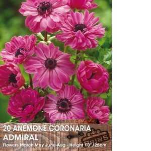 Anemone Bulbs Coronaria Admiral 15 Per Pack