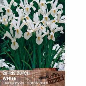 Iris Dutch Iris Bulbs White 20 Per Pack