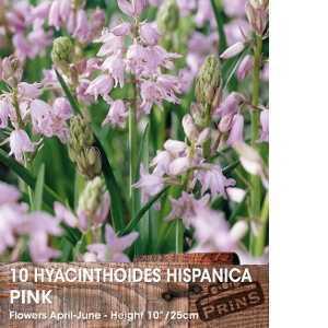 Hyacinthoides Hispanica Pink Bulbs 10 Per Pack (Spanish Bluebells)