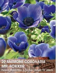 Anemone Bulbs Coronaria Mr Fokker 15 Per Pack