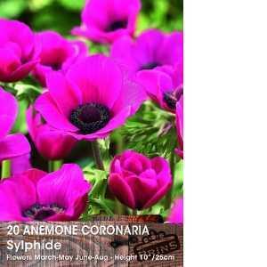 Anemone Bulbs Coronaria Sylphide 15 Per Pack