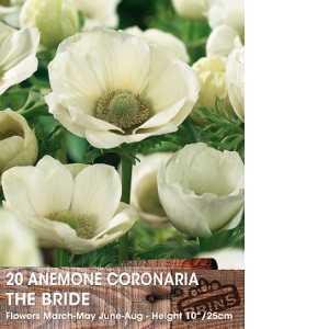 Anemone Bulbs Coronaria The Bride 15 Per Pack