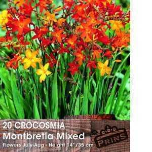 Crocosmia Montbretia Mixed Bulbs 20 Per Pack