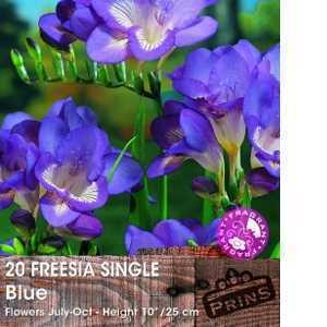 Freesia Single Blue Bulbs 20 Per Pack