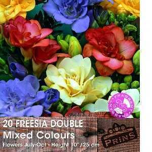 Freesia Double Mixed Bulbs 20 Per Pack