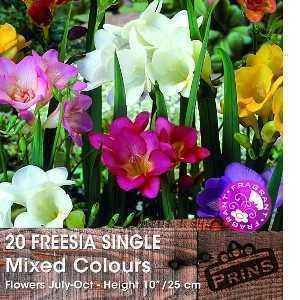 Freesia Single Mixed Bulbs 20 Per Pack