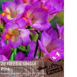 Freesia Single Pink Bulbs 20 Per Pack