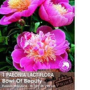 Paeonia (Peony) Lactiflora Bowl of Beauty Bulbs 1 Per Pack
