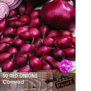 Red Onions Comred Bulbs 50 Per Pack
