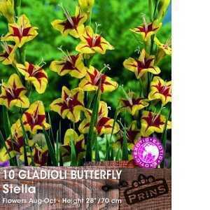 Gladioli Butterfly 'Stella' Bulbs 10 Per Pack