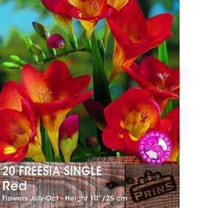 Freesia Single Red Bulbs 20 Per Pack