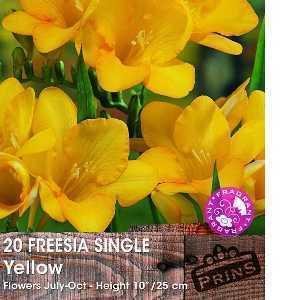 Freesia Single Yellow Bulbs 20 Per Pack