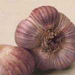 Garlic Germidour (Allium Sativum) 2 Per Pack