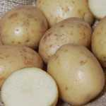 Unwins Seed Potatoes Bambino Organic (Salad) Mid Season Cropping 6 Per Pack