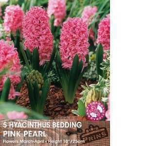 Hyacinth Prepared Bulbs Pink Pearl 3 Per Pack