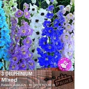 Delphinium Mixed Pre-Packed Perennials 3 Per Pack