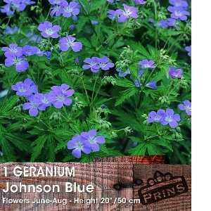 Geranium Johnson Blue Pre-Packed Perennial 1 Per Pack