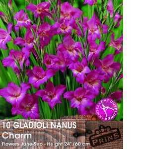 Gladioli Nanus Charm Bulbs 10 Per Pack