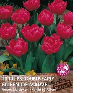 Tulip Bulbs Double Early Queen Of Marvel 10 Per Pack