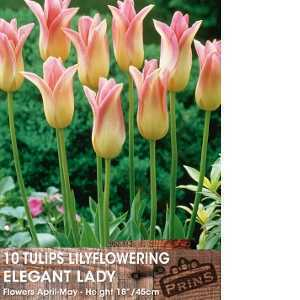 Tulip Bulbs Lilyflowering Elegant Lady 10 Per Pack